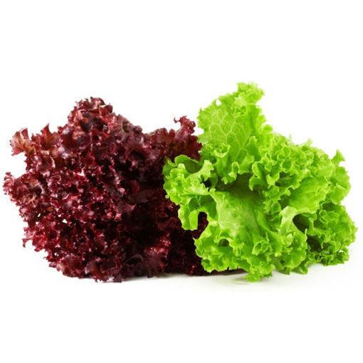 Picture of Fancy Lettuce - 200g