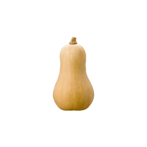 Picture of Butternut - Each