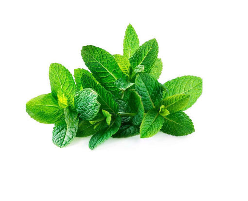 Picture of Fresh Mint - 100g