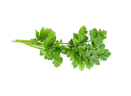 Picture of Coriander - 100g