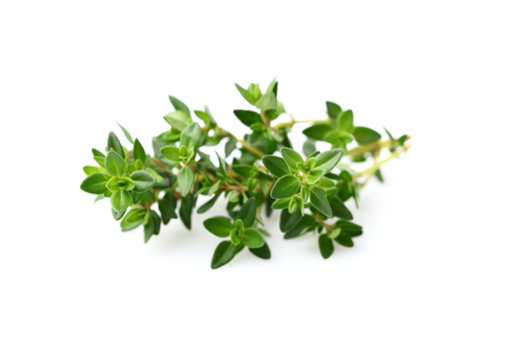 Picture of Thyme - 100g