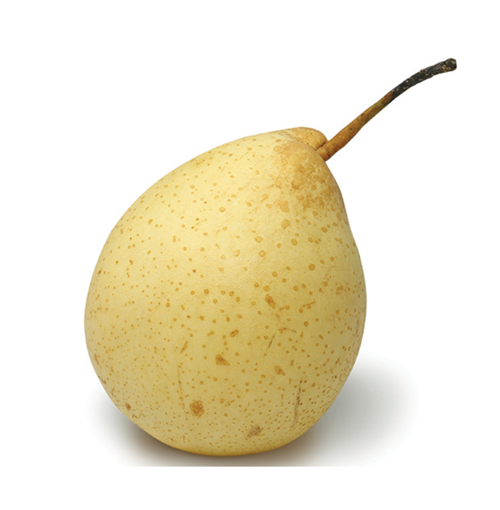 Picture of Asian Pear (Import) - Each