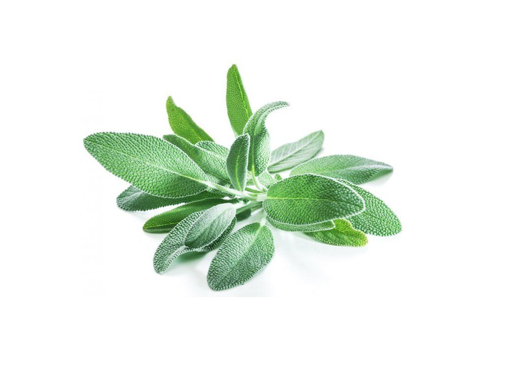 Picture of Sage - Per kg